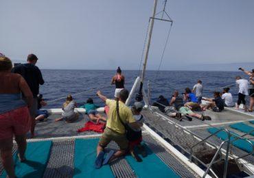 LIFE Madeira lobo-marinho embarca nos mares da Madeira