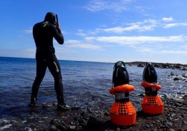 """LIFE Madeira lobo-marinho traz à """"superfície"""" habitat subaquático do lobo-marinho"""