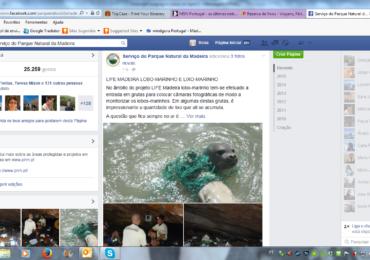 LIFE Madeira Lobo-Marinho e Lixo-marinho