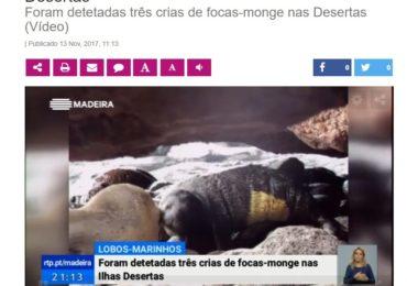 La foca monje y el LIFE Madeira foca monje en la RTP