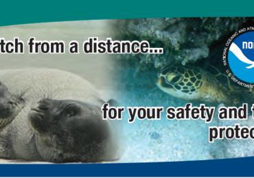 Estamos com a NOAA, pela proteção do Lobo-marinho