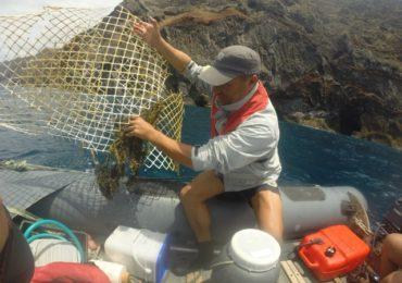 LIFE Madeira Lobo-marinho contribui para um mar mais limpo