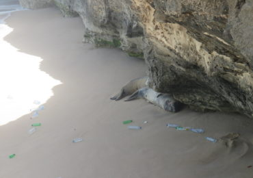 Marine litter in monk seal habitat in Mauritania