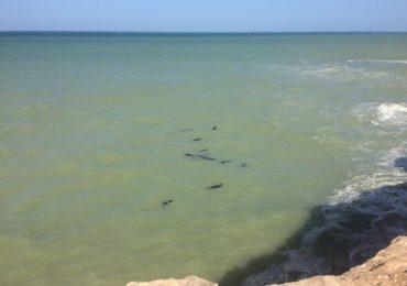 LIFE Madeira Lobo-marinho visita à maior colónia de lobos-marinhos do mundo